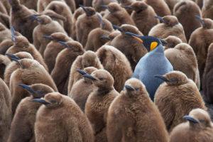 Freie Meinungsäußerung - hart erkämpft (Image src: Jeremy Richards / Fotolia)
